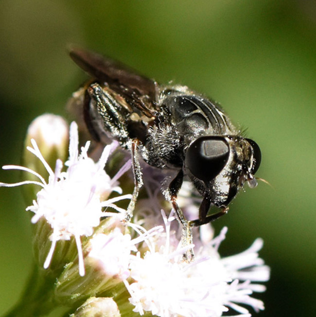 Pollinators-butterfly-wasp-bee-mosquito-or-fly-small-plant