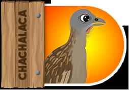Chachalaca