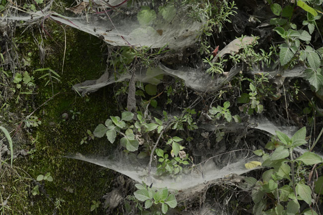 spider web pattern roadside towards Comalapa Aug 8 2015 NH spider WEB DSC3041